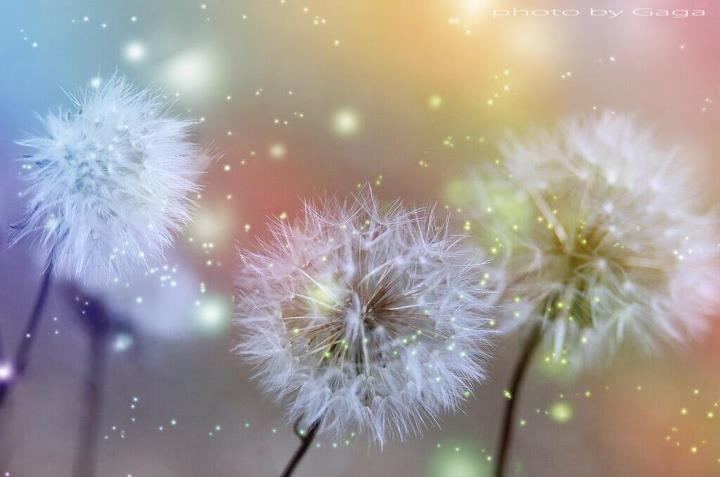 magical flowers photography: dandelion glitter & sparkles